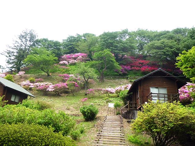 弥高山公園キャンプ場 image